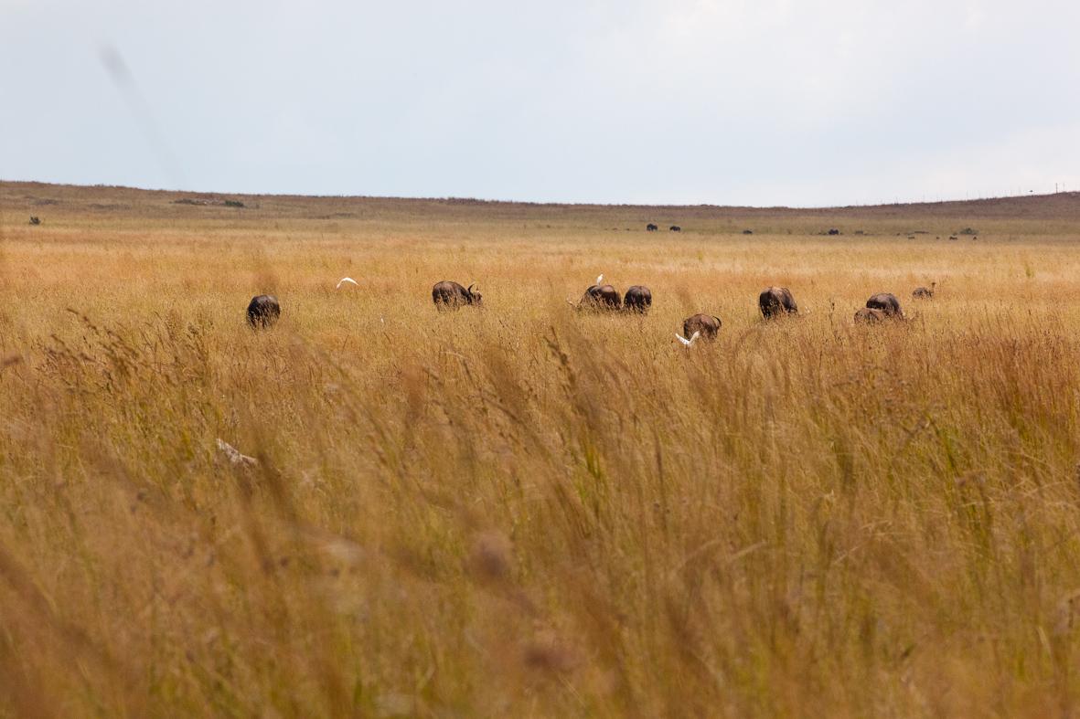 rhinopark