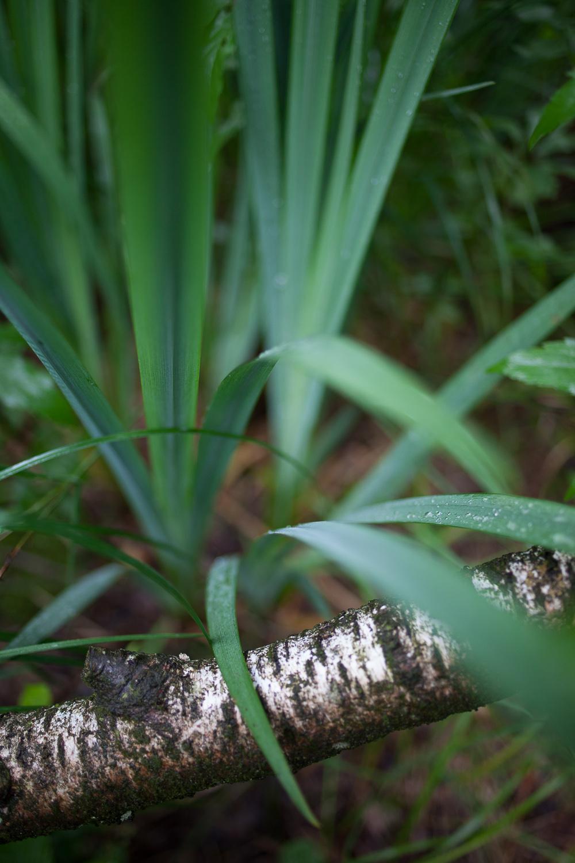 Wald-3.jpg