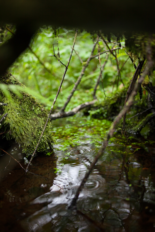 Wald-4.jpg