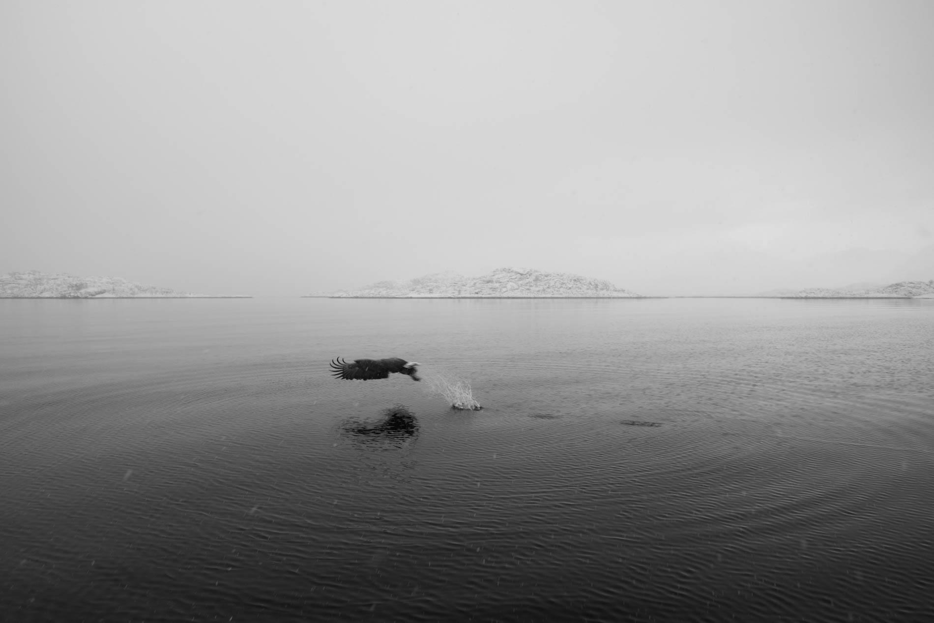 lofoten-8261.jpg