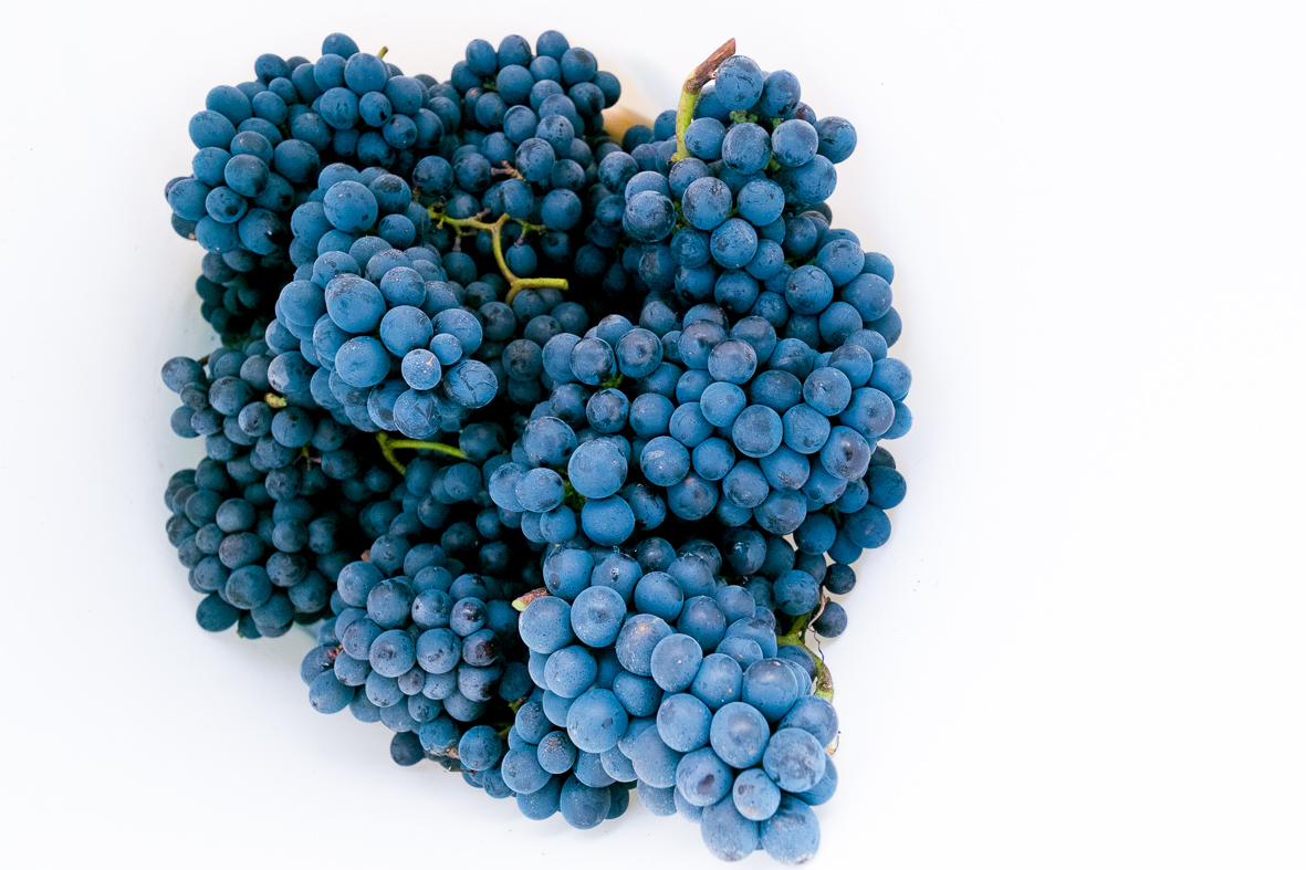 blue burgundy grapes